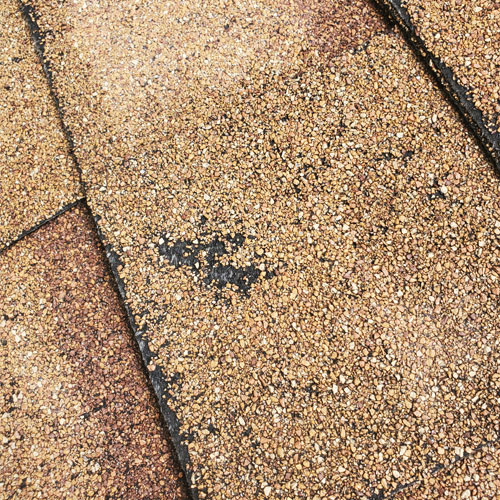 Composite Roof shingle with hail damage in New Braunfels